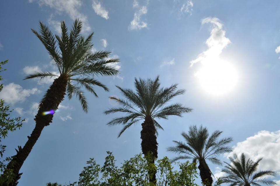 Photo of palm trees below the valley sun